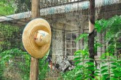 En hatt på fridsam trädgård royaltyfri foto