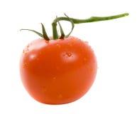 en hel tomat Fotografering för Bildbyråer
