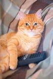 En hem- katt på soffan med en fjärrkontroll i hans tafsar Royaltyfria Bilder
