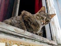 En hemlös katt ligger på fönstret av ett förstört hus royaltyfri bild