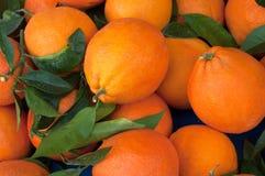 En hög av apelsiner Royaltyfri Fotografi