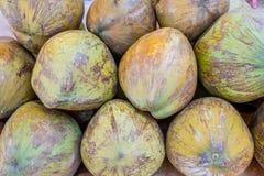 En hög av till salu gröna kokosnötter Royaltyfria Bilder