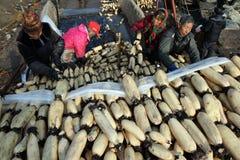 En hiver les travailleurs gagnent leur monnaie métallique dans l'étang Photographie stock libre de droits