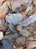 En hjärta av stenen Arkivbilder