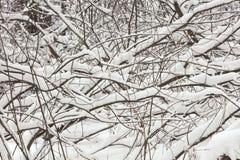 En horisontalabstrakt sammansättning av filialer och snö Arkivfoto