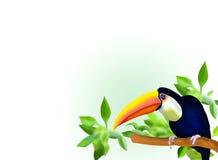 En Hornbill förgrena sig och lämnar på bakgrund vektor illustrationer
