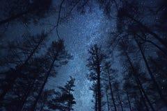 En härlig natthimmel, Vintergatan och   träd Royaltyfri Foto