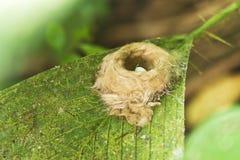 Hummingbirden bygga bo med ägget Arkivbilder