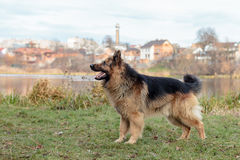 En hund är den bästa och riktiga vännen av mannen Royaltyfria Bilder