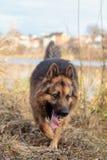 En hund är den bästa och riktiga vännen av mannen Arkivfoton