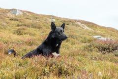 En hund är den bästa och riktiga vännen av mannen Royaltyfri Bild