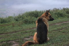 En hund Arkivfoto