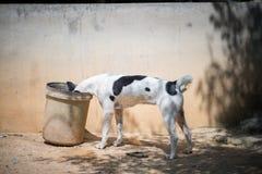 En hund Arkivbilder