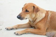 En hund Royaltyfri Foto