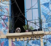 En hund- blick arkivfoto
