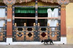 En hund går i borggården av dzongen av Paro (Bhutan) Arkivfoto