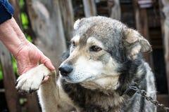 En hund ger en tafsa till en man Royaltyfri Bild