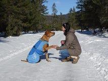 En hund ger tafsa Arkivbild