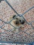 En hund i ett animleskydd Fotografering för Bildbyråer