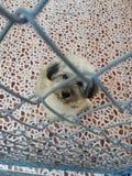 En hund i ett djurt skydd Arkivfoto