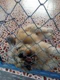 En hund i ett djurt skydd royaltyfri bild