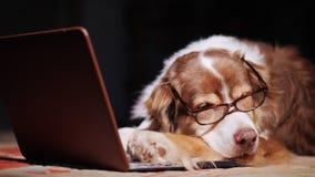 En hund i exponeringsglas sover nära en bärbar dator Överansträngning på arbetsbegreppet royaltyfria bilder