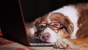 En hund i exponeringsglas sover nära en bärbar dator royaltyfri bild