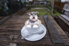 En hund i kaffekopp Arkivfoto