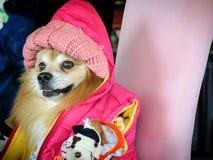 En hund i rosa färgdräkt arkivbild
