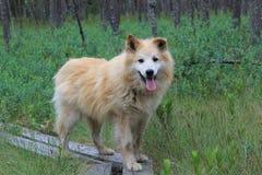 En hund i skog royaltyfri foto