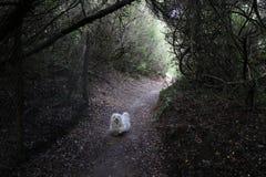 En hund i skog arkivbild