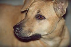 En hund i Thailand royaltyfri foto