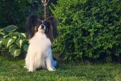 En hund i trädgården royaltyfri foto