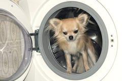 En hund i tvagningmaskin Royaltyfri Foto