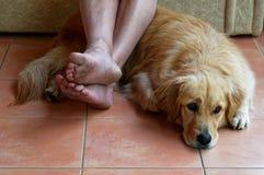 En hund ligger p? golvet framme av en soffa, p? hans f?rlages fot fotografering för bildbyråer