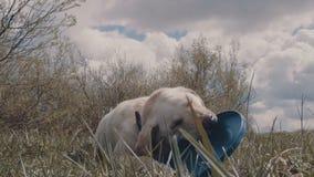 En hund med en Frisbee arkivfilmer