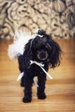En hund med en pilbåge Royaltyfria Foton