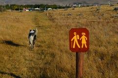 En hund och handelsresande Arkivbilder