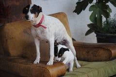 En hund och hans docka royaltyfri foto