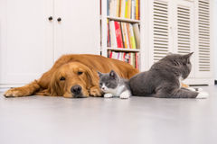 En hund och katter som inomhus tas arkivfoto