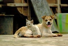 En hund och lite en katt Arkivbild