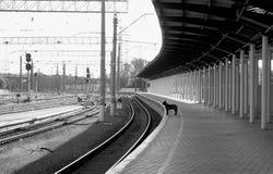 En hund på den Dnepr järnvägsstationplattformen Royaltyfri Fotografi