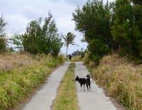 En hund på den lantliga vägen Fotografering för Bildbyråer