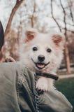 En hund p? skuldran fotografering för bildbyråer