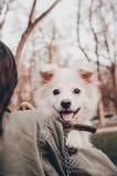 En hund p? skuldran royaltyfria bilder