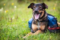 En hund sitter i ett gräs- fält arkivfoto