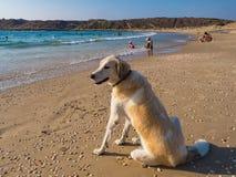 En hund sitter på kusten Royaltyfria Foton