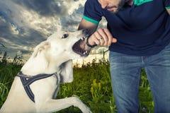 En hund ska bita en man Fotografering för Bildbyråer