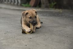 En hund som biter ett grönt blad Arkivfoton