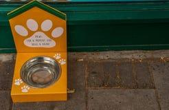 En hund som framme väntar av en silvermetallbunke för att någon mat sätts i den för matställetid fotografering för bildbyråer